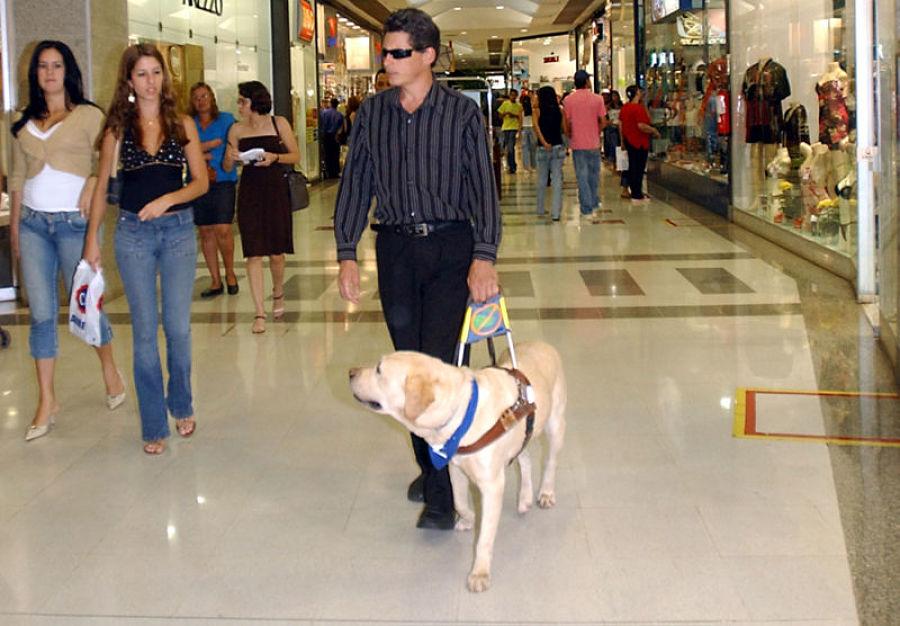 Perro guía en Zooterapia